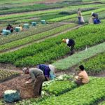 Land Reforms in India (Short Notes) | UPSC - IAS