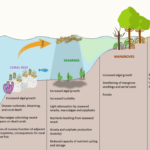 Causes of Eutrophication and Algal bloom | UPSC - IAS